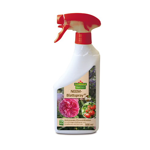 Neem Blattspray in Sprühflasche 500 ml