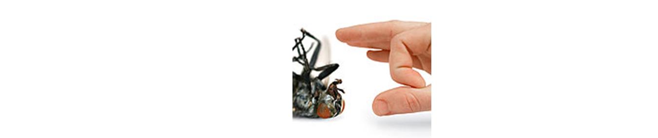 Pflanzenschutz gegen Insekten