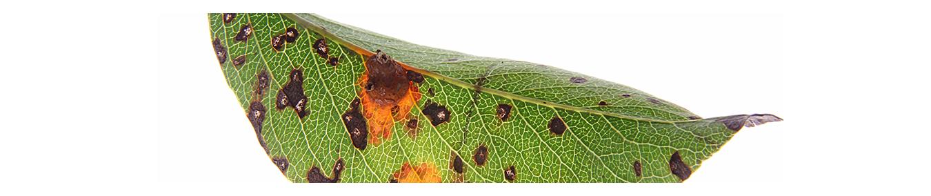 Pflanzenschutzmittel gegen Pilzkrankheiten