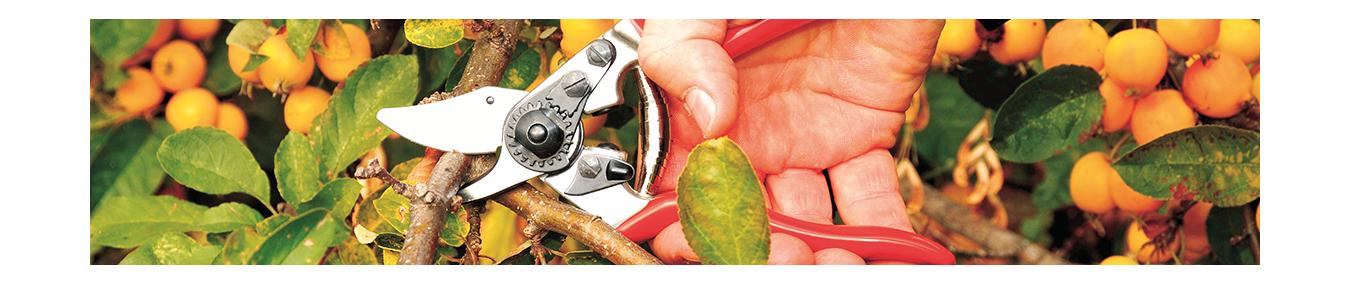 Scheren von Felco | Baumschere | Astschere