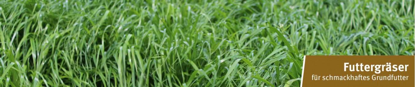 Gräser Landwirtschaft