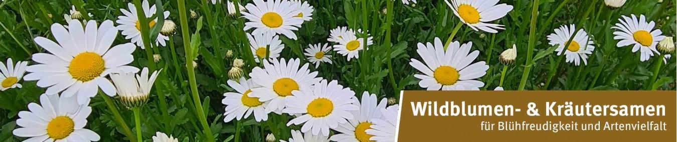Wildblumensamen| Wildblumenmischung | Wildblumenwiese