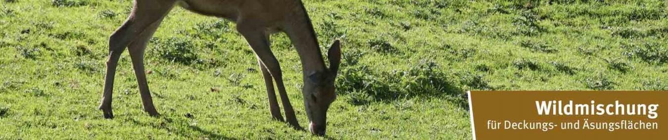 Wild- & Blühwiesen